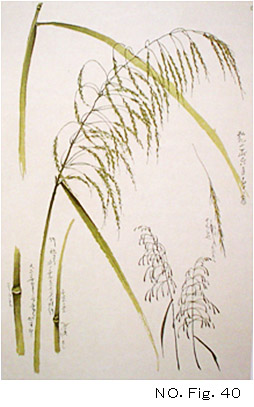 北斎(No.Fig.40)