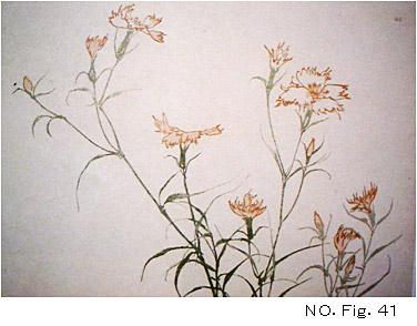 北斎(No.Fig.41)